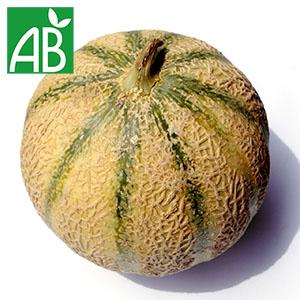 melon biologique